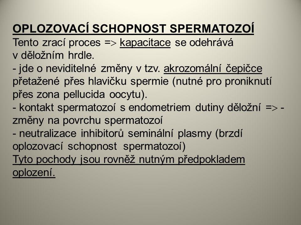 OPLOZOVACÍ SCHOPNOST SPERMATOZOÍ Tento zrací proces =  kapacitace se odehrává v děložním hrdle.