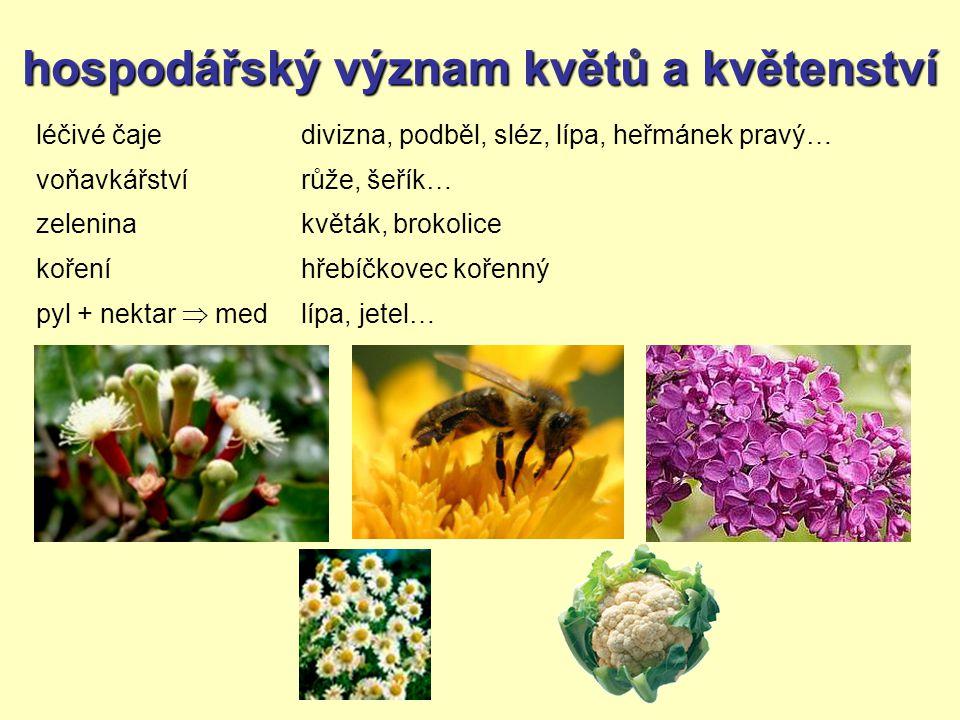 hospodářský význam květů a květenství léčivé čaje voňavkářství zelenina koření pyl + nektar  med divizna, podběl, sléz, lípa, heřmánek pravý… růže, šeřík… květák, brokolice hřebíčkovec kořenný lípa, jetel…