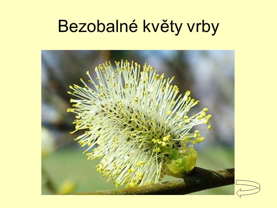 opylení samosprašnost cizosprašnost entomogamie anemogamie přenos pylových zrn z tyčinek na bliznu = autogamie – opylení vlastním pylem = alogamie – opylení cizím pylem přenos pylu hmyzem – 80% kvetoucích rostlin přenos pylu větrem - traviny