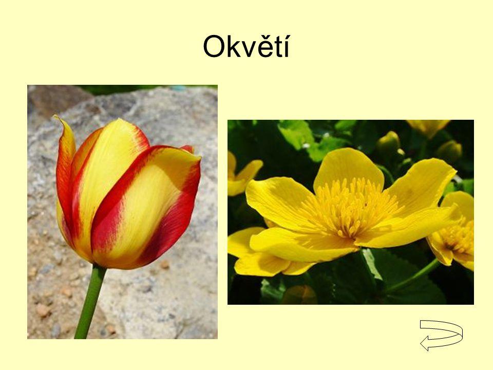 Okvětí