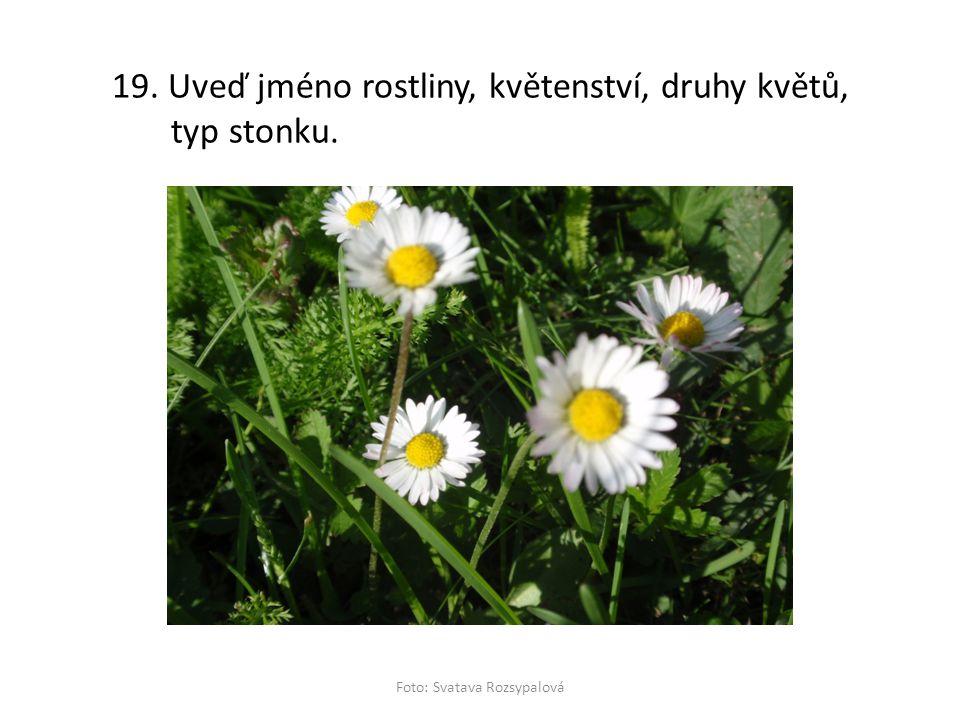 19. Uveď jméno rostliny, květenství, druhy květů, typ stonku. Foto: Svatava Rozsypalová