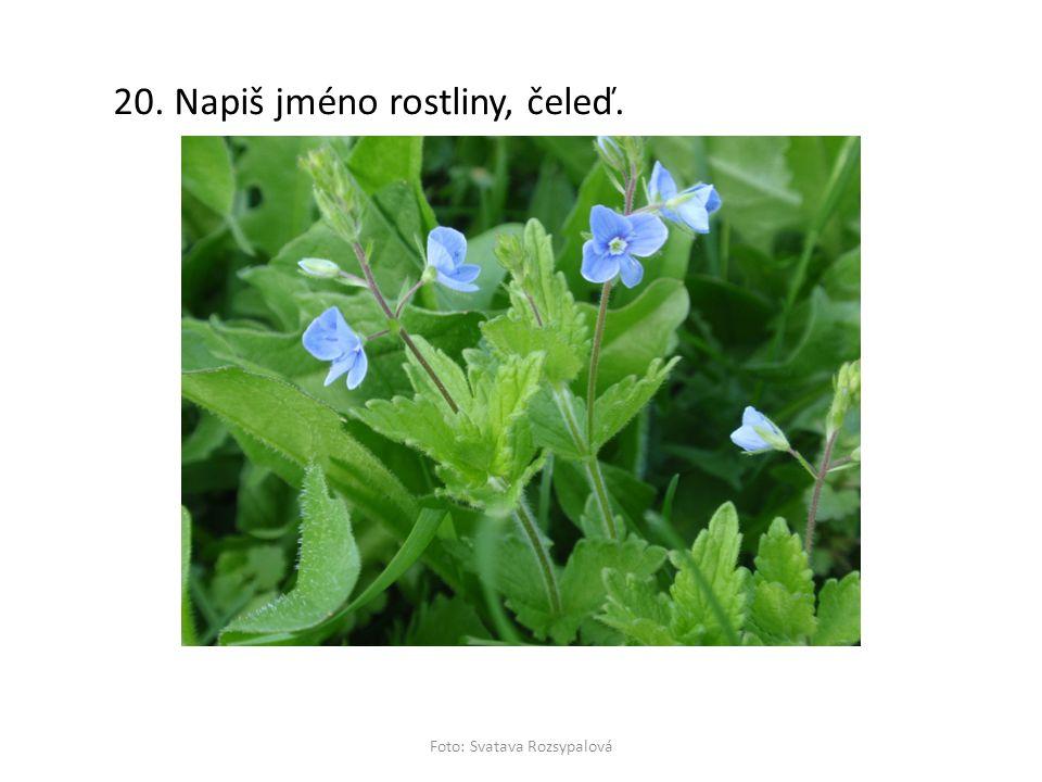 20. Napiš jméno rostliny, čeleď. Foto: Svatava Rozsypalová