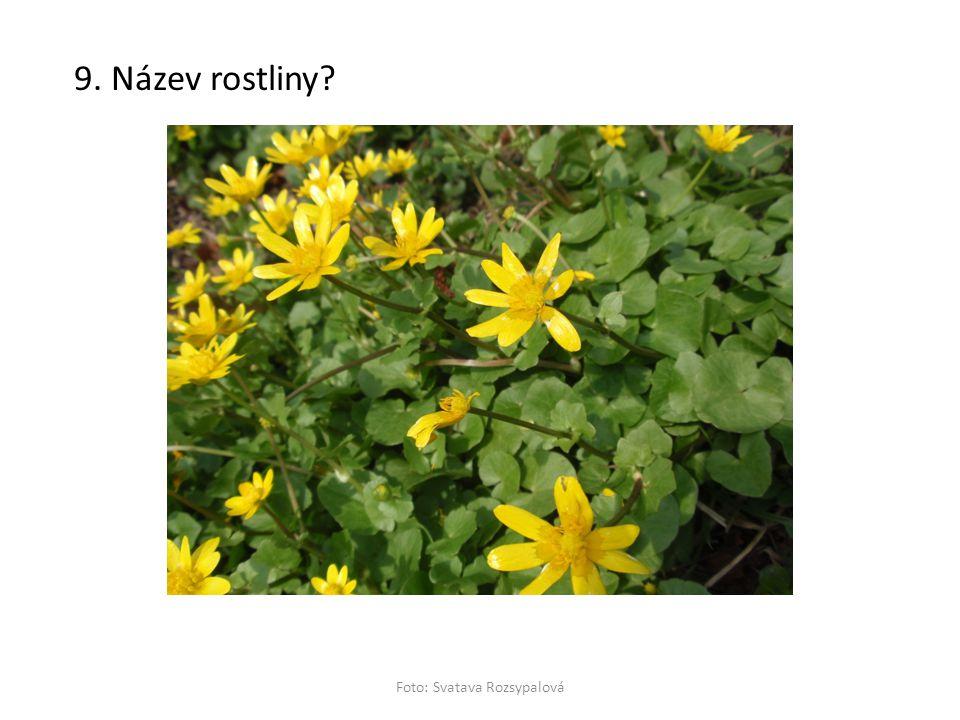 9. Název rostliny? Foto: Svatava Rozsypalová