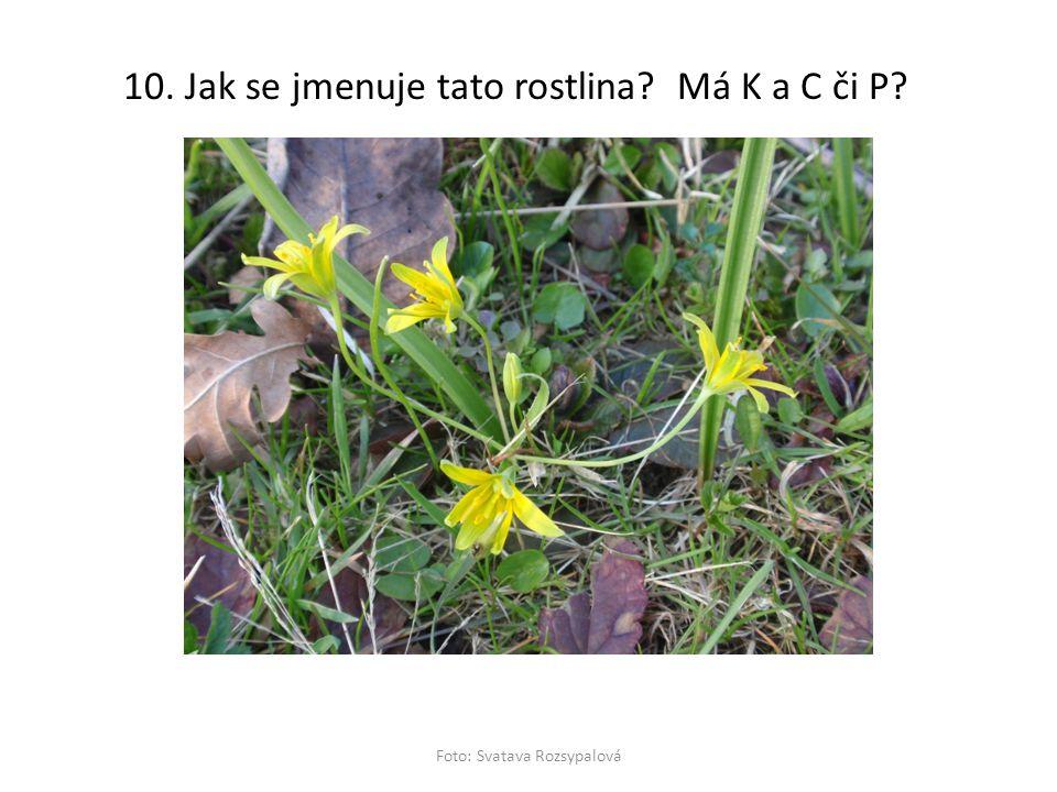 10. Jak se jmenuje tato rostlina? Má K a C či P? Foto: Svatava Rozsypalová