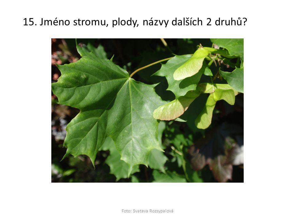 15. Jméno stromu, plody, názvy dalších 2 druhů? Foto: Svatava Rozsypalová
