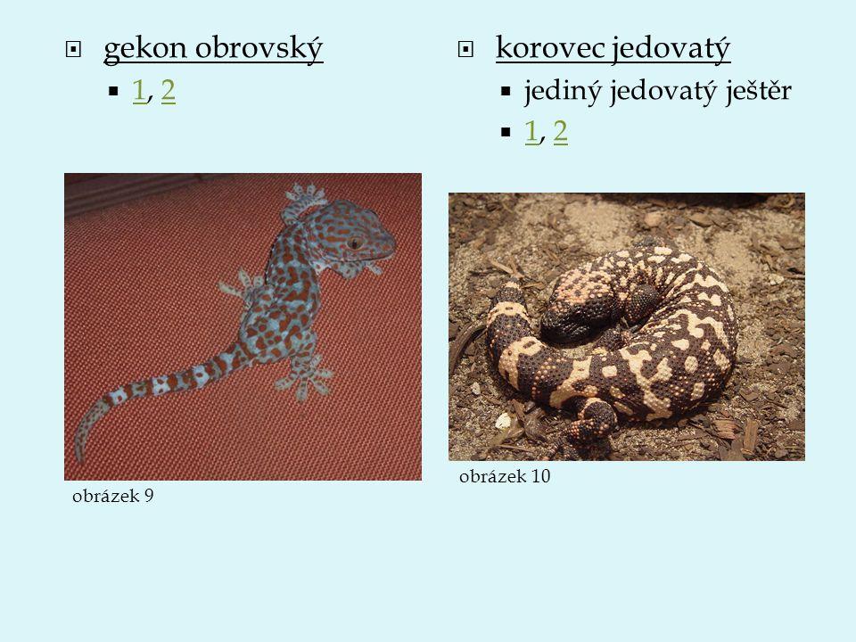  gekon obrovský  1, 2 12  korovec jedovatý  jediný jedovatý ještěr  1, 2 12 obrázek 9 obrázek 10