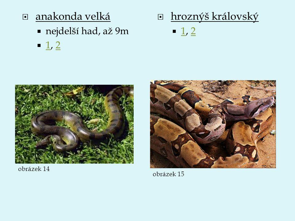  anakonda velká  nejdelší had, až 9m  1, 2 12  hroznýš královský  1, 2 12 obrázek 14 obrázek 15