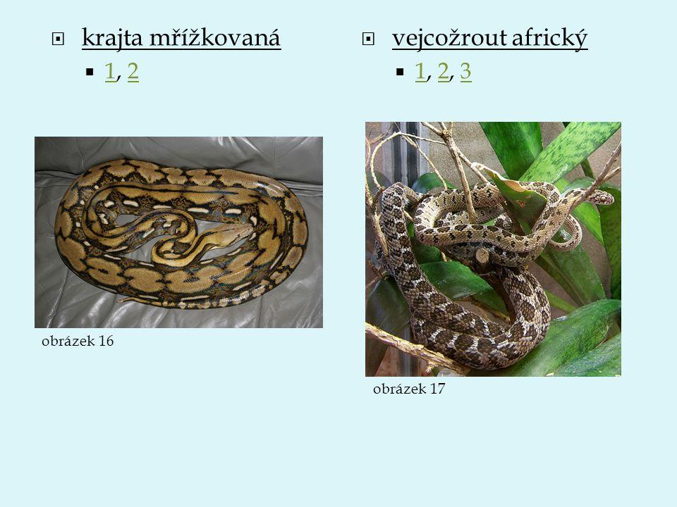  krajta mřížkovaná  1, 2 12  vejcožrout africký  1, 2, 3 123 obrázek 16 obrázek 17