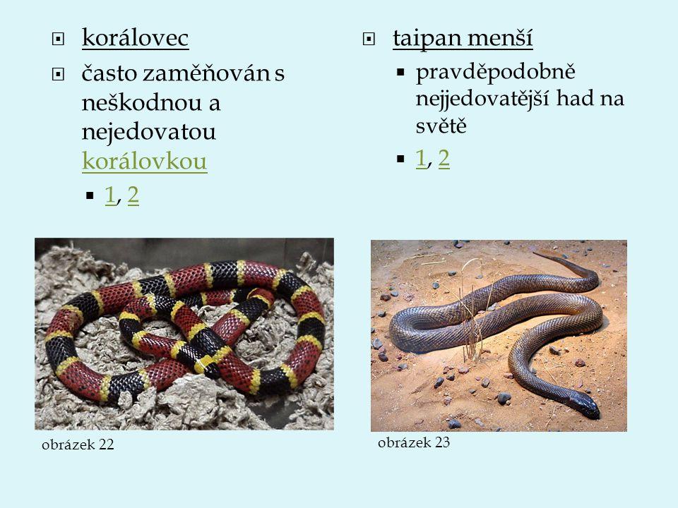  korálovec  často zaměňován s neškodnou a nejedovatou korálovkou korálovkou  1, 2 12  taipan menší  pravděpodobně nejjedovatější had na světě  1