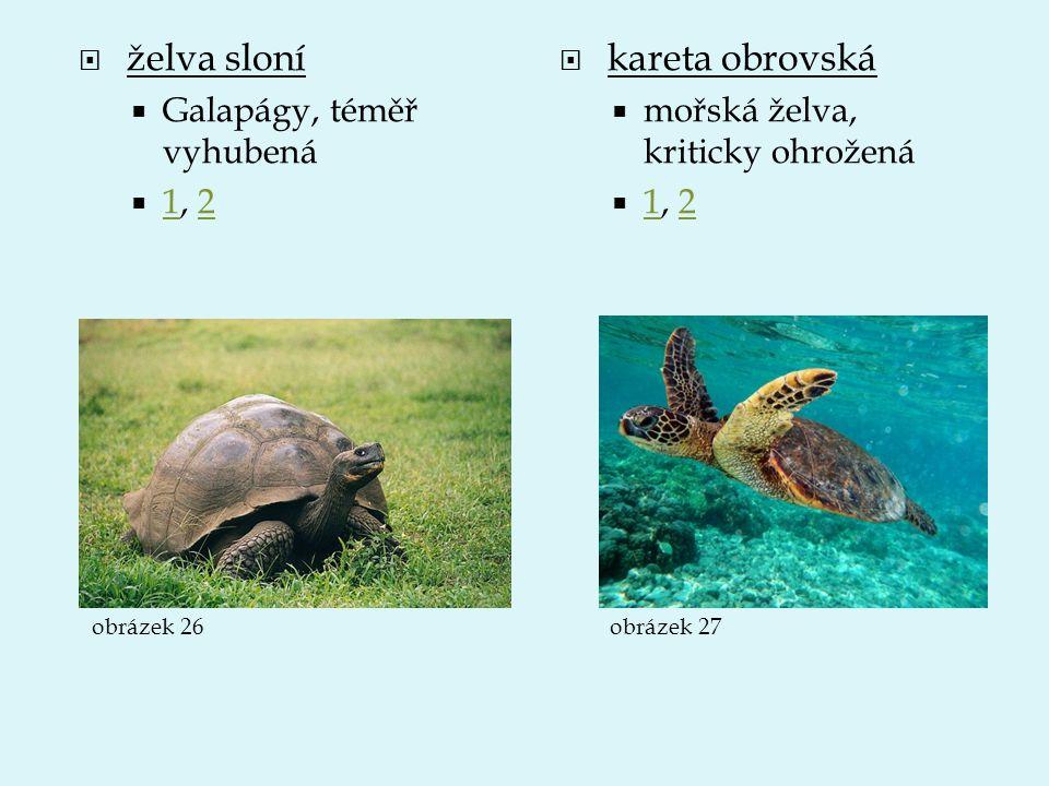  želva sloní  Galapágy, téměř vyhubená  1, 2 12  kareta obrovská  mořská želva, kriticky ohrožená  1, 2 12 obrázek 26obrázek 27