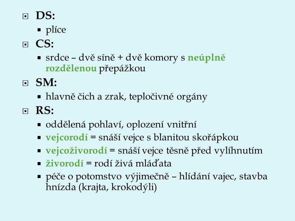 DS:  plíce  CS:  srdce – dvě síně + dvě komory s neúplně rozdělenou přepážkou  SM:  hlavně čich a zrak, tepločivné orgány  RS:  oddělená pohl