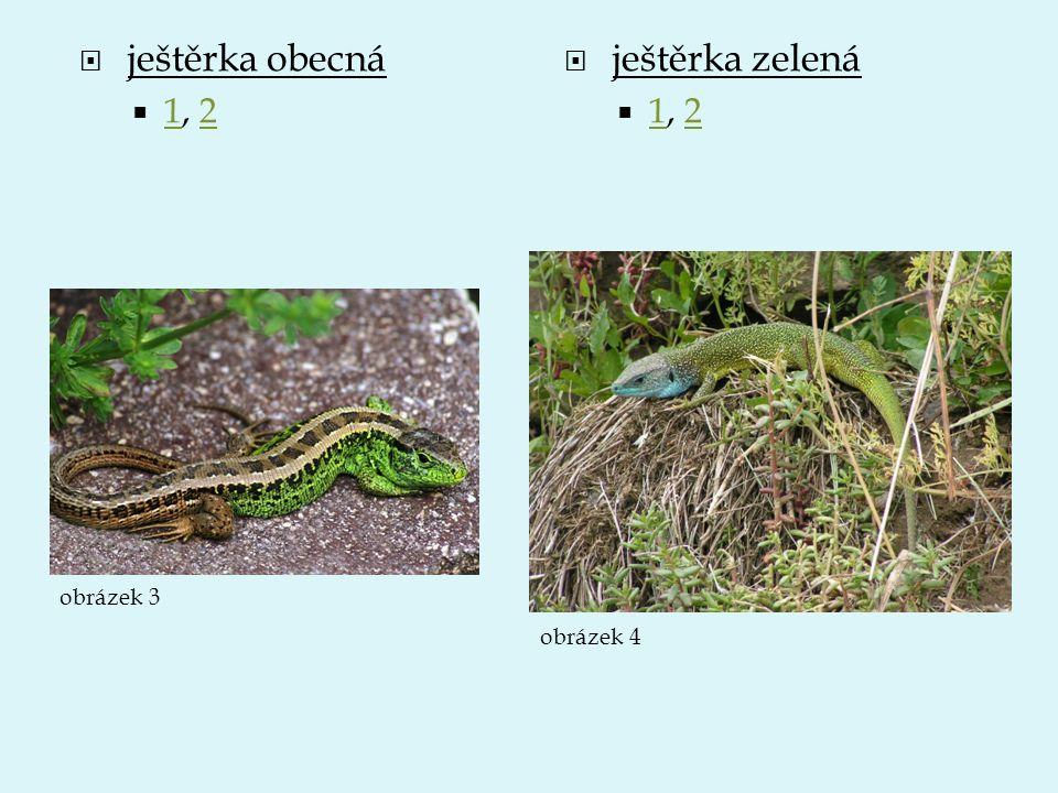  ještěrka obecná  1, 2 12  ještěrka zelená  1, 2 12 obrázek 3 obrázek 4