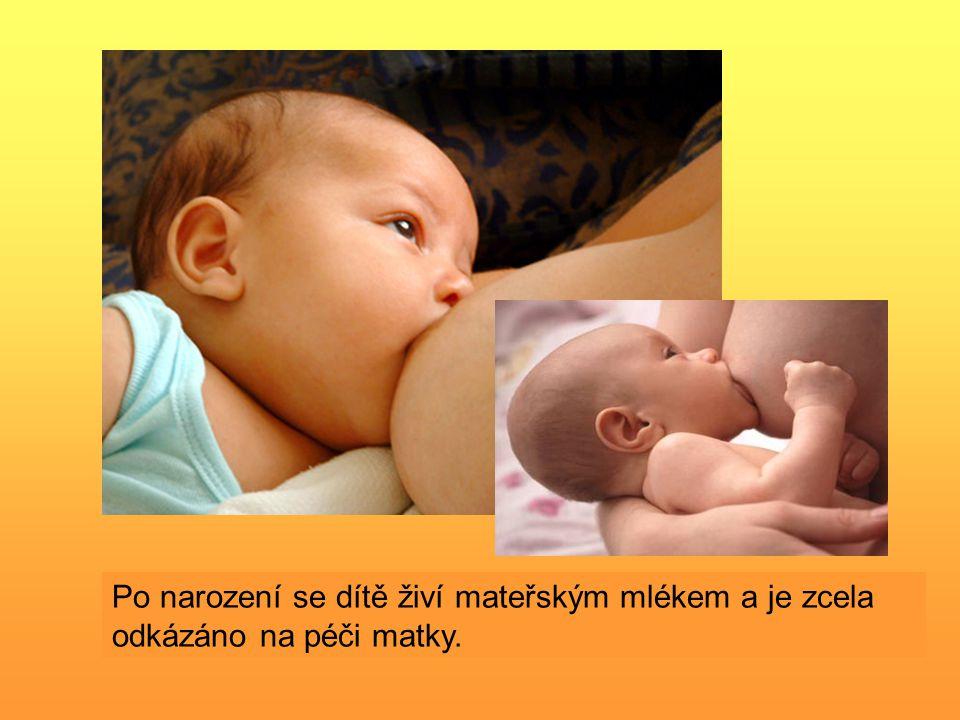 Po narození se dítě živí mateřským mlékem a je zcela odkázáno na péči matky.