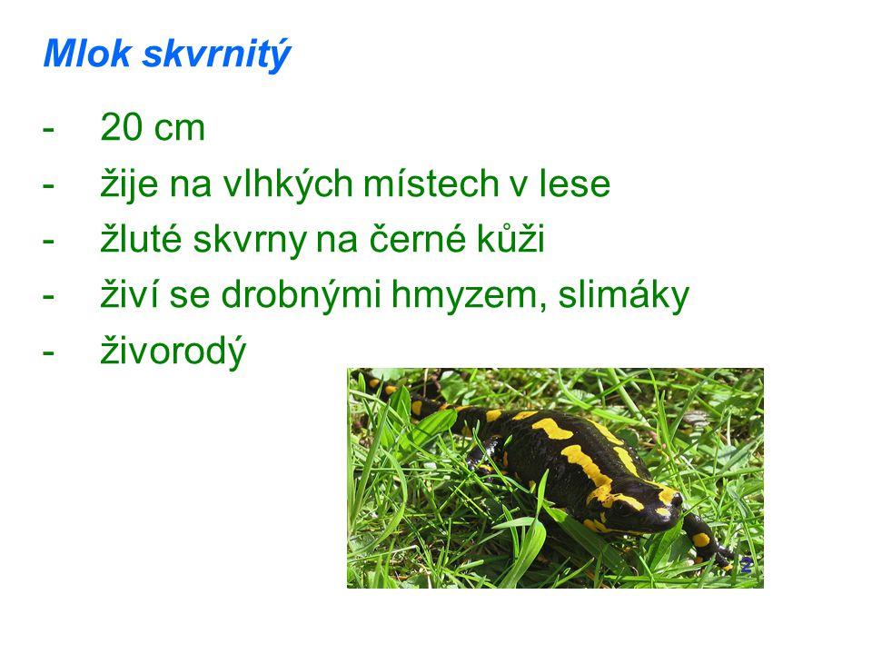 Mlok skvrnitý -20 cm -žije na vlhkých místech v lese -žluté skvrny na černé kůži -živí se drobnými hmyzem, slimáky -živorodý 2