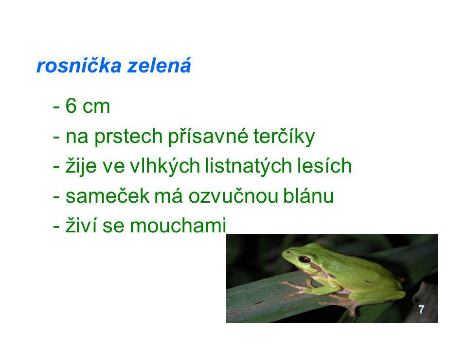 rosnička zelená - 6 cm - na prstech přísavné terčíky - žije ve vlhkých listnatých lesích - sameček má ozvučnou blánu - živí se mouchami 7