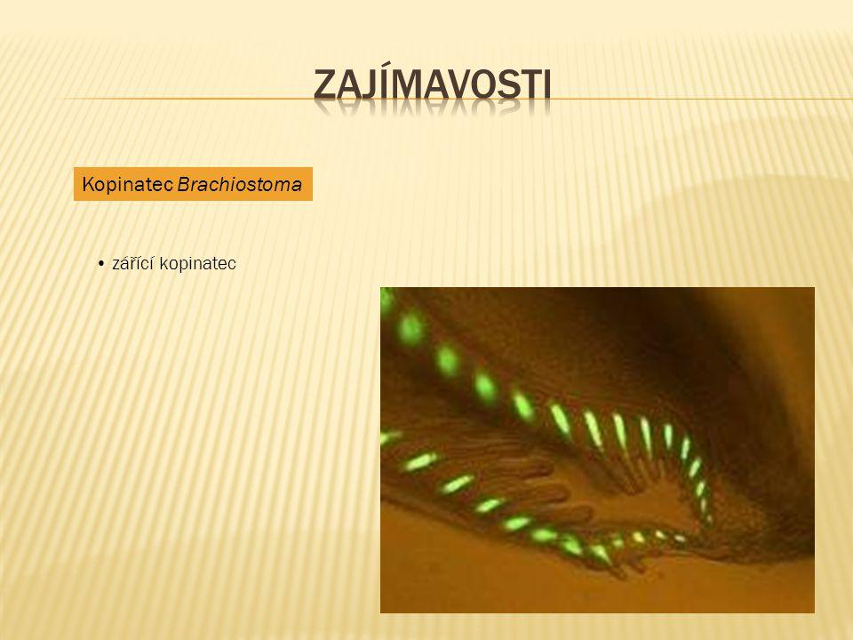  http://jitcinyzvirata.blog.cz/en/0904/animace-ryb http://jitcinyzvirata.blog.cz/en/0904/animace-ryb  http://liska-a-myska.blog.cz/0911/ruzne-animace-zvirat-28 http://liska-a-myska.blog.cz/0911/ruzne-animace-zvirat-28  http://cs.wikipedia.org/wiki/Pl%C3%A1%C5%A1t%C4%9Bnci http://cs.wikipedia.org/wiki/Pl%C3%A1%C5%A1t%C4%9Bnci  http://www.biolib.cz/cz/image/id12014/ http://www.biolib.cz/cz/image/id12014/  http://rockymountainpony.blog.cz/1006/animace-psu http://rockymountainpony.blog.cz/1006/animace-psu  http://zvirata-29.maxportal.cz/inzerce/hadi-plazi-zelvy-465 http://zvirata-29.maxportal.cz/inzerce/hadi-plazi-zelvy-465  http://bio-nature.blog.cz/1004/obojzivelnici-strucne http://bio-nature.blog.cz/1004/obojzivelnici-strucne  Učebnice Přírodopisu pro 7.