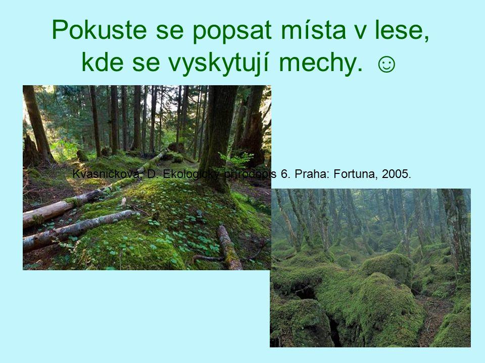 Mechy v lesích Vladislava Zubrová