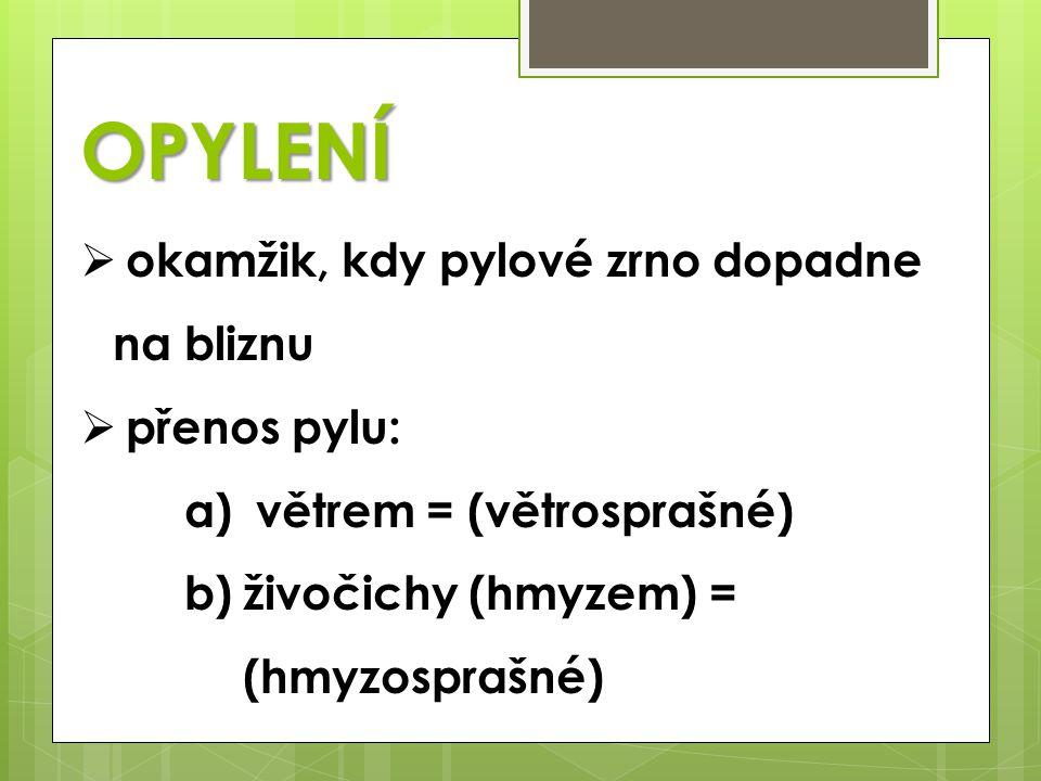 OPYLENÍ  okamžik, kdy pylové zrno dopadne na bliznu  přenos pylu: a) větrem = (větrosprašné) b)živočichy (hmyzem) = (hmyzosprašné)