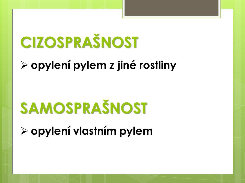 CIZOSPRAŠNOST  opylení pylem z jiné rostlinySAMOSPRAŠNOST  opylení vlastním pylem
