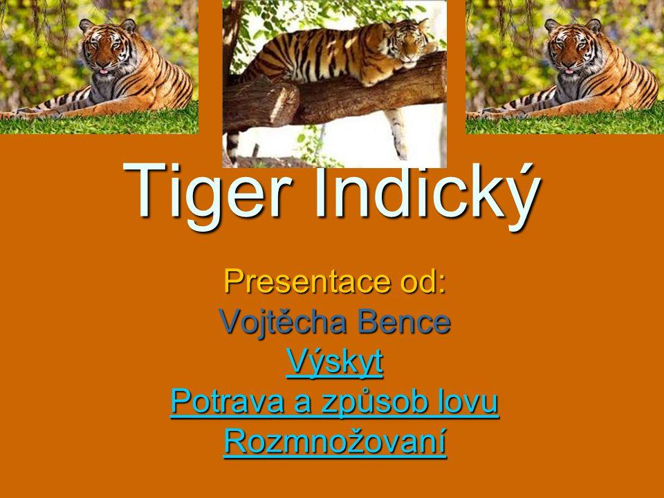 Tiger Indický Presentace od: Vojtěcha Bence Výskyt Potrava a způsob lovu Potrava a způsob lovu Rozmnožovaní