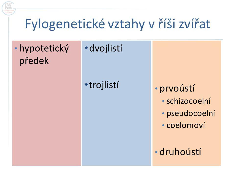 Fylogenetické vztahy v říši zvířat dvojlistí trojlistí prvoústí schizocoelní pseudocoelní coelomoví druhoústí hypotetický předek