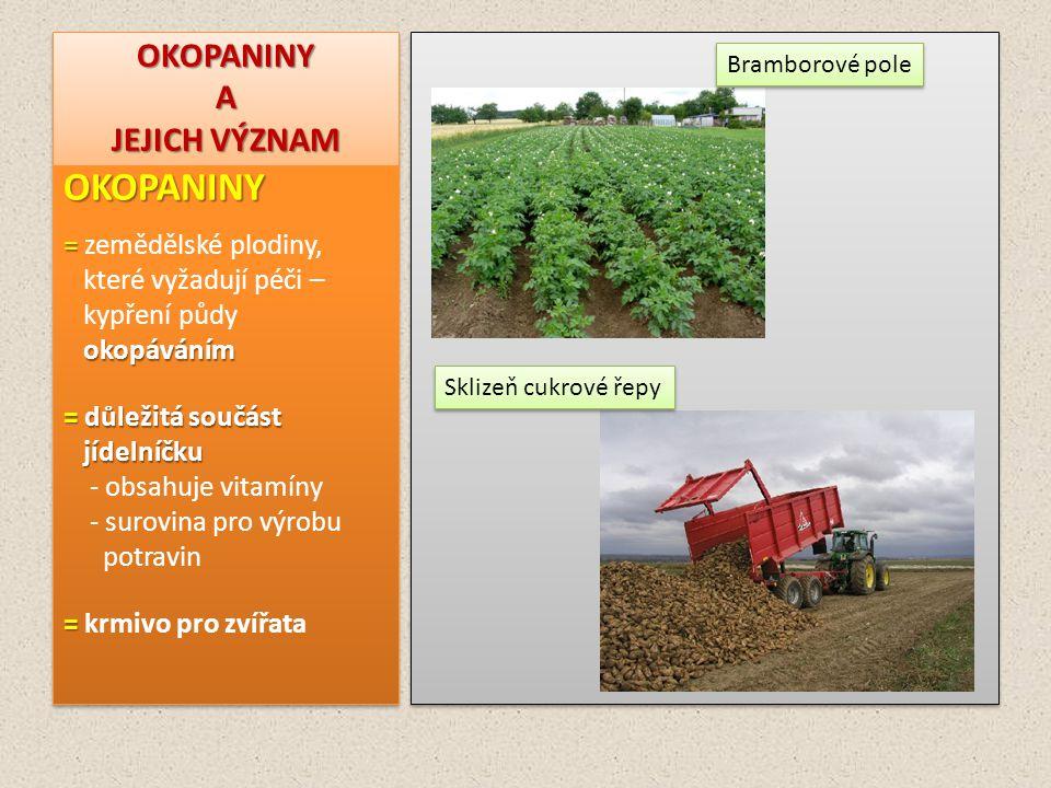 OKOPANINY A JEJICH VÝZNAM OKOPANINY = = zemědělské plodiny, které vyžadují péči – kypření půdy okopáváním okopáváním = důležitá součást jídelníčku jíd