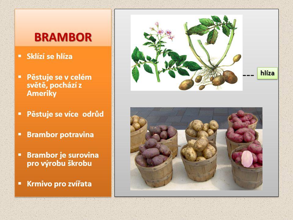 BRAMBORBRAMBOR ---- ----  Sklízí se hlíza  Pěstuje se v celém světě, pochází z Ameriky  Pěstuje se více odrůd  Brambor potravina  Brambor je suro