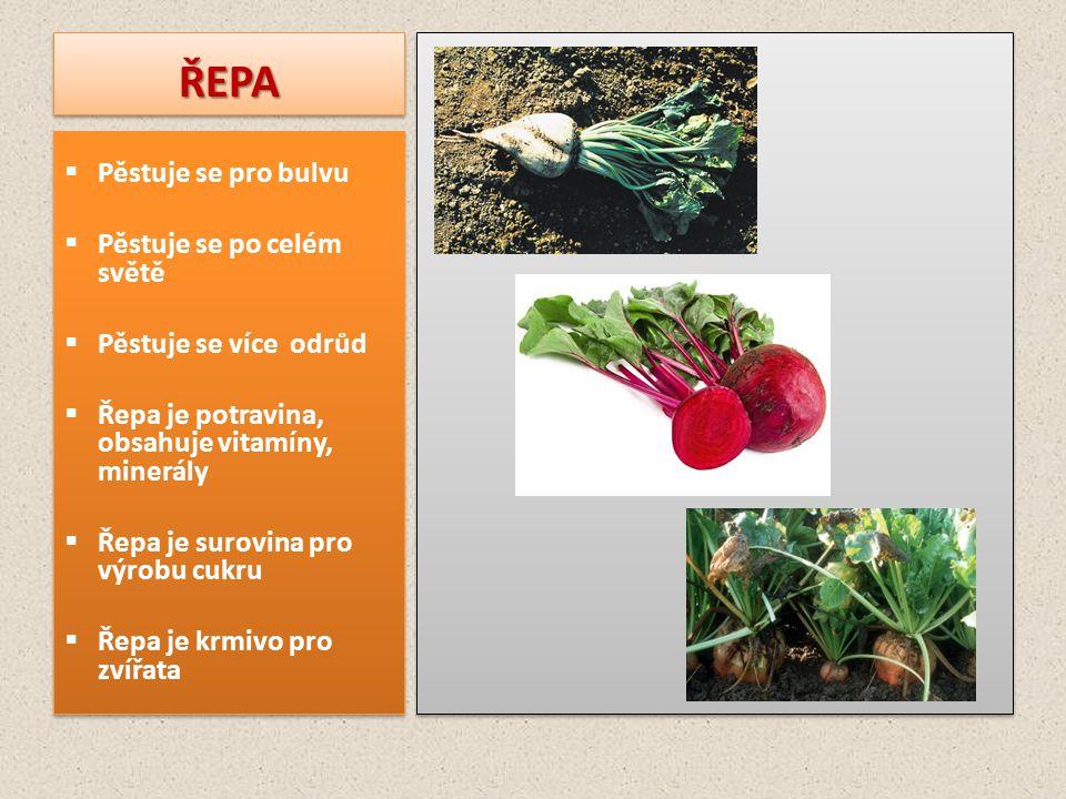 ŘEPAŘEPA  Pěstuje se pro bulvu  Pěstuje se po celém světě  Pěstuje se více odrůd  Řepa je potravina, obsahuje vitamíny, minerály  Řepa je surovin