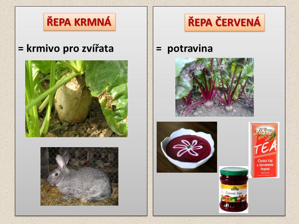 = krmivo pro zvířata = potravina ŘEPA KRMNÁ ŘEPA ČERVENÁ