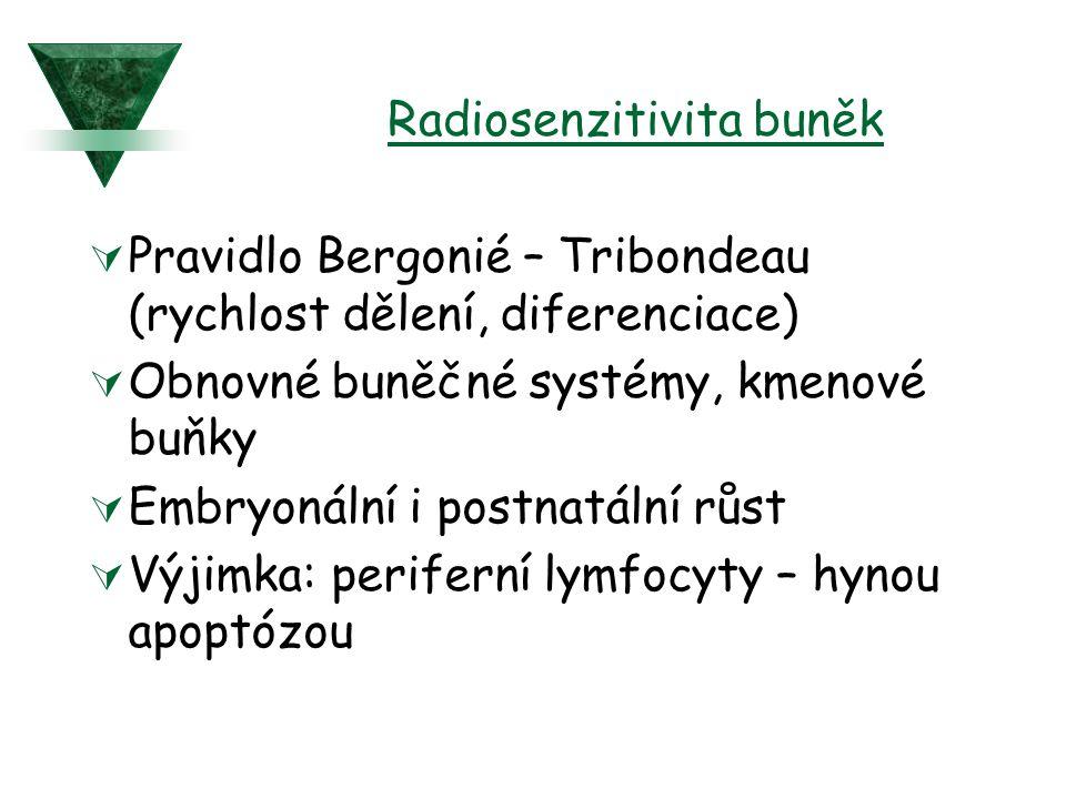 Radiosenzitivita buněk  Pravidlo Bergonié – Tribondeau (rychlost dělení, diferenciace)  Obnovné buněčné systémy, kmenové buňky  Embryonální i postn