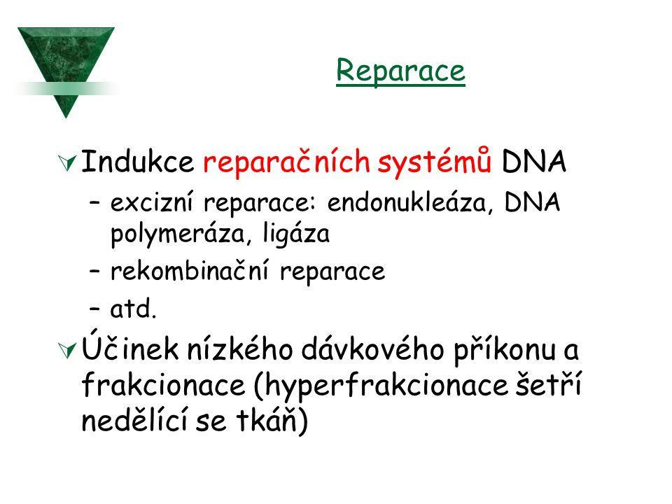 Reparace  Indukce reparačních systémů DNA –excizní reparace: endonukleáza, DNA polymeráza, ligáza –rekombinační reparace –atd.  Účinek nízkého dávko