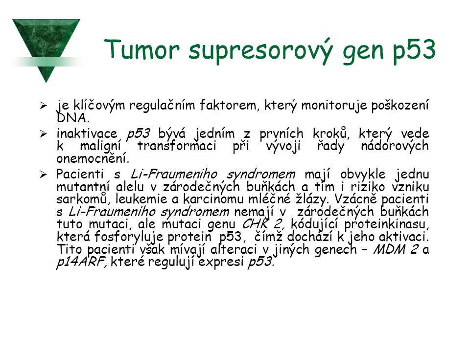Tumor supresorový gen p53  je klíčovým regulačním faktorem, který monitoruje poškození DNA.  inaktivace p53 bývá jedním z prvních kroků, který vede