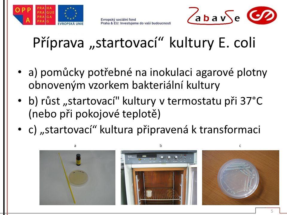 """Příprava """"startovací"""" kultury E. coli a) pomůcky potřebné na inokulaci agarové plotny obnoveným vzorkem bakteriální kultury b) růst """"startovací"""