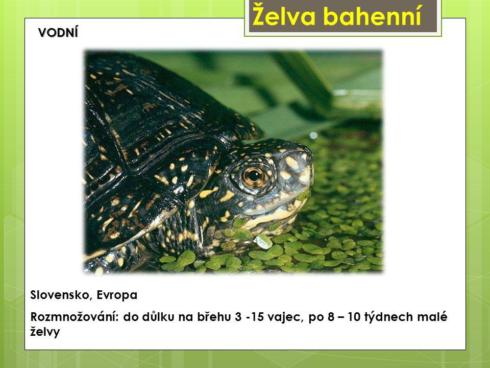 Želva bahenní Slovensko, Evropa Rozmnožování: do důlku na břehu 3 -15 vajec, po 8 – 10 týdnech malé želvy VODNÍ