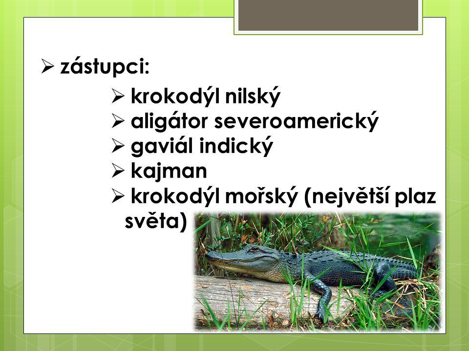  zástupci:  krokodýl nilský  aligátor severoamerický  gaviál indický  kajman  krokodýl mořský (největší plaz světa)