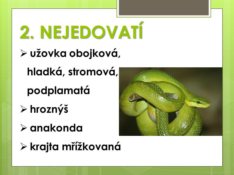 2. NEJEDOVATÍ  užovka obojková, hladká, stromová, podplamatá  hroznýš  anakonda  krajta mřížkovaná