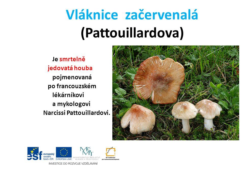 Vláknice začervenalá (Pattouillardova) Je smrtelně jedovatá houba pojmenovaná po francouzském lékárníkovi a mykologovi Narcissi Pattouillardovi.