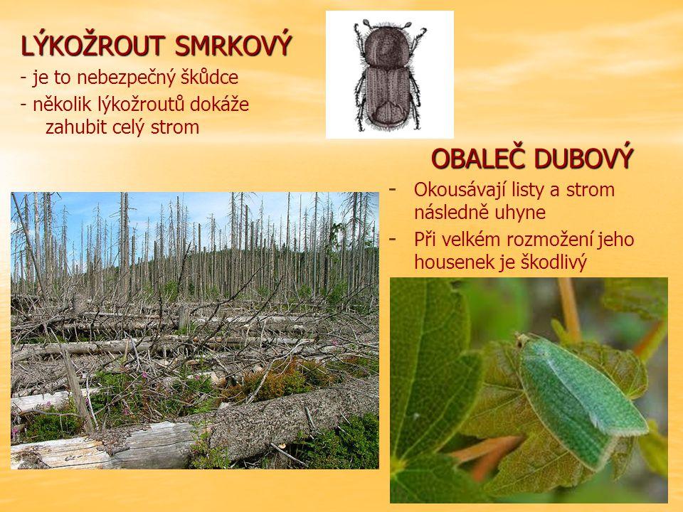 LÝKOŽROUT SMRKOVÝ - je to nebezpečný škůdce - několik lýkožroutů dokáže zahubit celý strom OBALEČ DUBOVÝ - - Okousávají listy a strom následně uhyne - - Při velkém rozmožení jeho housenek je škodlivý