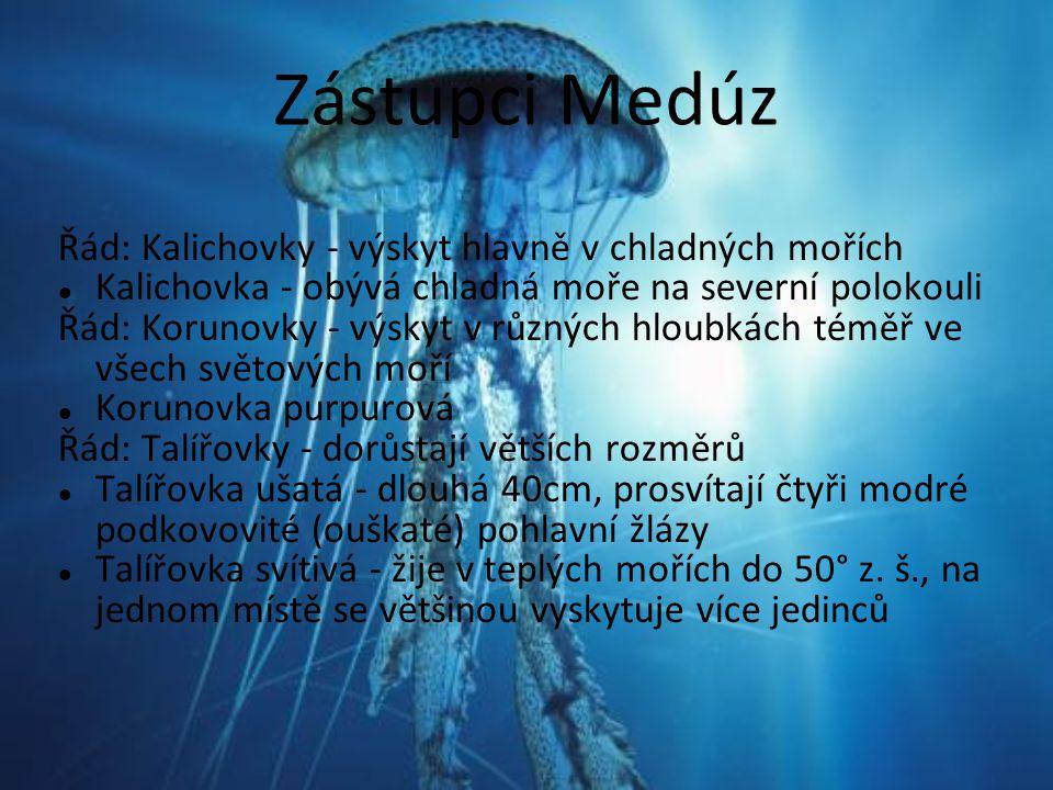 Zástupci Medúz Řád: Kalichovky - výskyt hlavně v chladných mořích Kalichovka - obývá chladná moře na severní polokouli Řád: Korunovky - výskyt v různý