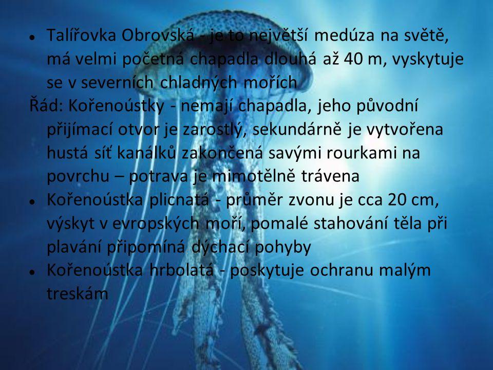 Talířovka Obrovská - je to největší medúza na světě, má velmi početná chapadla dlouhá až 40 m, vyskytuje se v severních chladných mořích Řád: Kořenoús