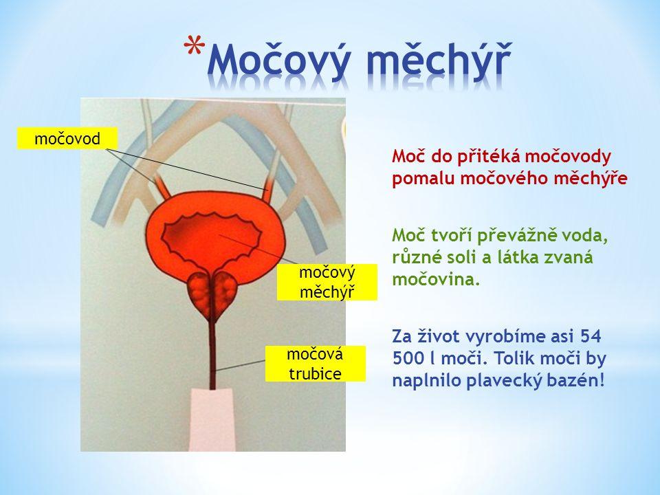 močovod močový měchýř močová trubice Moč do přitéká močovody pomalu močového měchýře Moč tvoří převážně voda, různé soli a látka zvaná močovina.