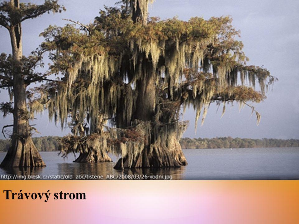 Trávový strom