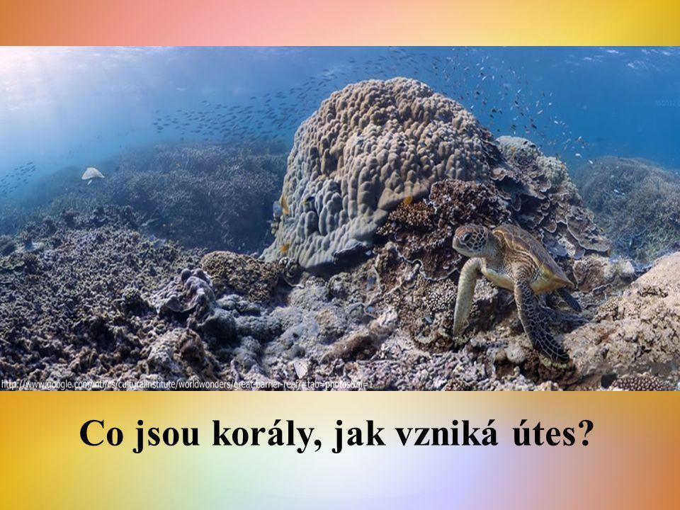 Co jsou korály, jak vzniká útes?