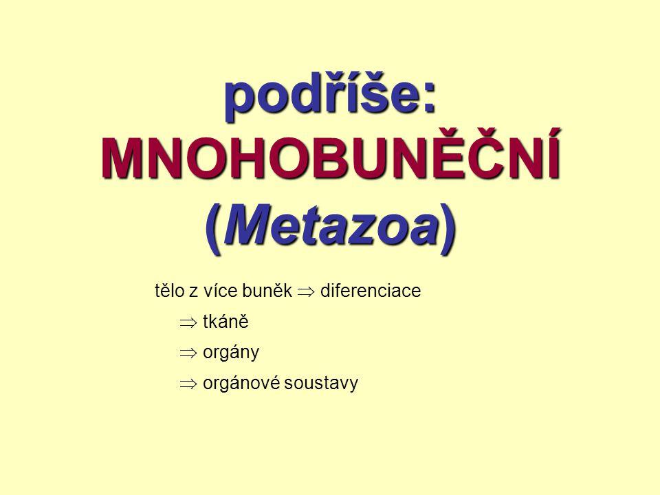 podříše: MNOHOBUNĚČNÍ (Metazoa) tělo z více buněk  diferenciace  tkáně  orgány  orgánové soustavy