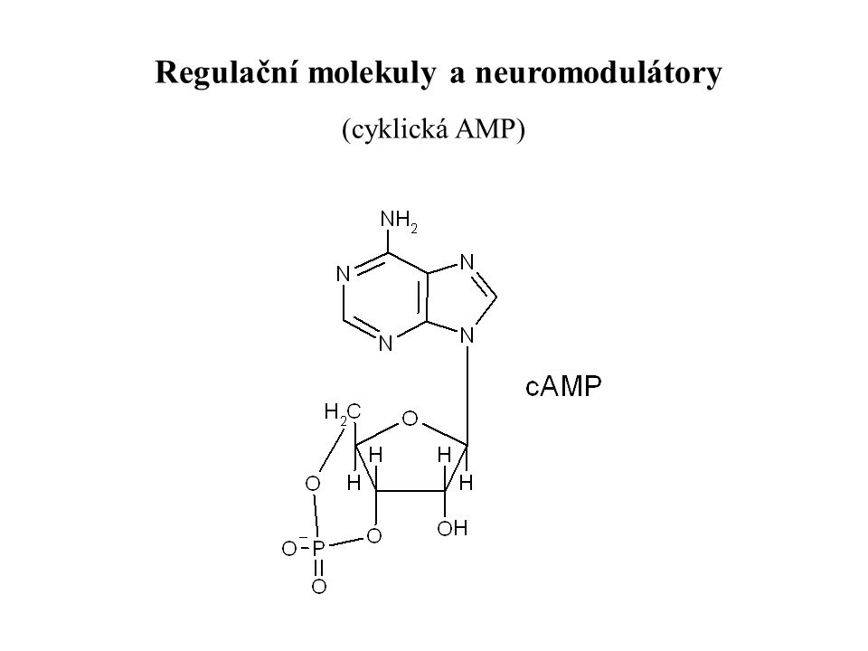 Regulační molekuly a neuromodulátory (cyklická AMP)