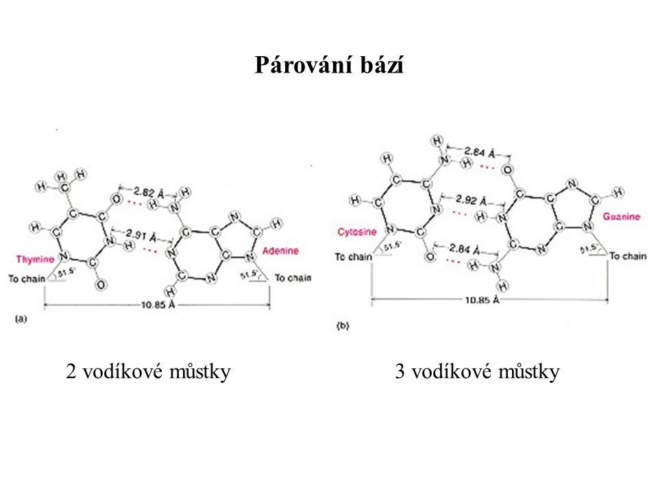 Párování bází 2 vodíkové můstky3 vodíkové můstky