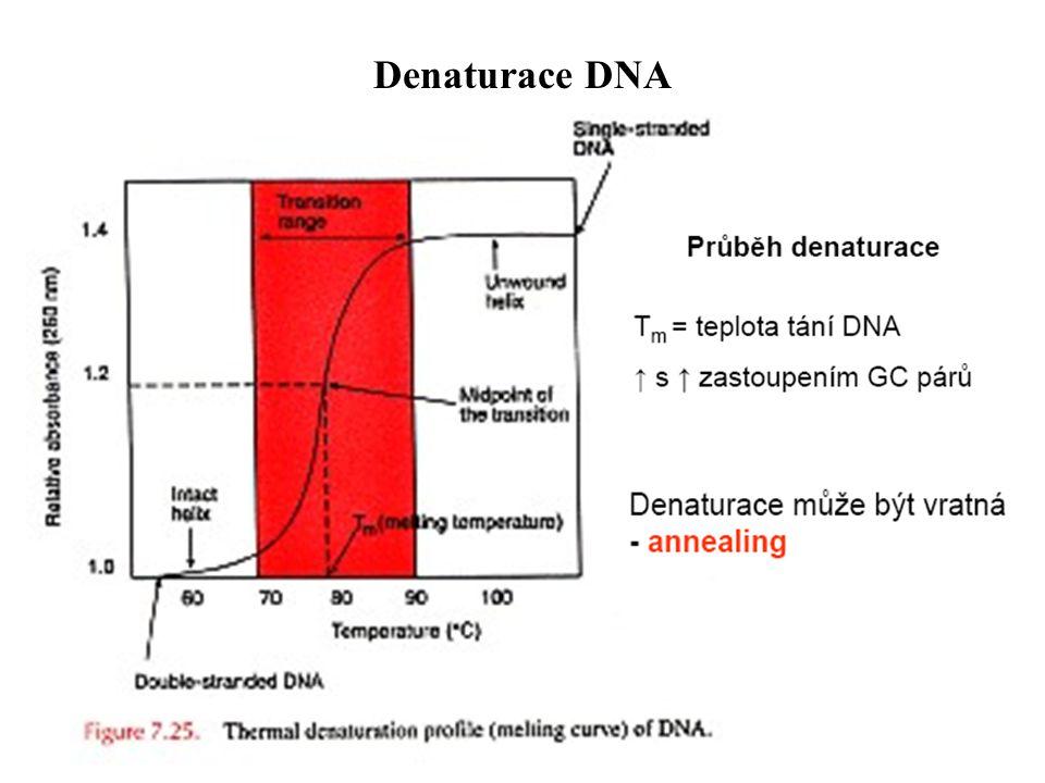 Denaturace DNA
