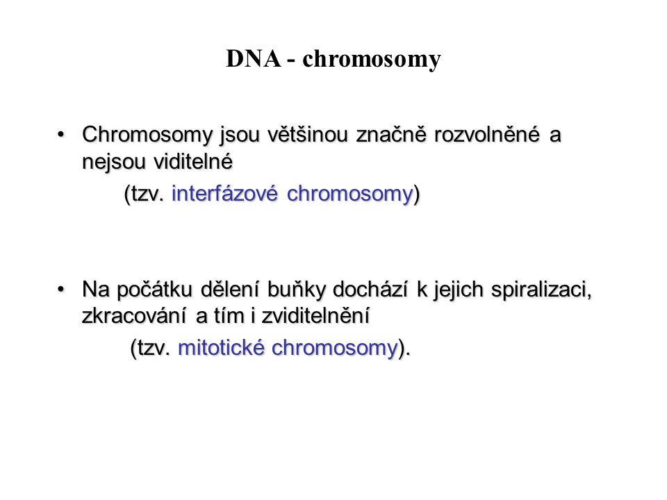 Chromosomy jsou většinou značně rozvolněné a nejsou viditelnéChromosomy jsou většinou značně rozvolněné a nejsou viditelné (tzv. interfázové chromosom