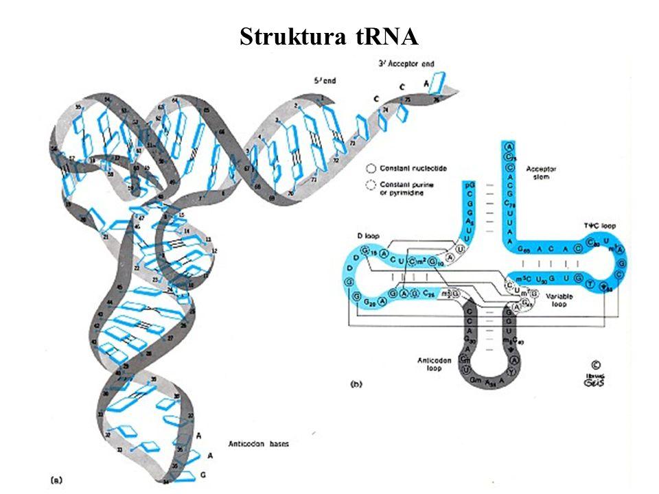 Struktura tRNA