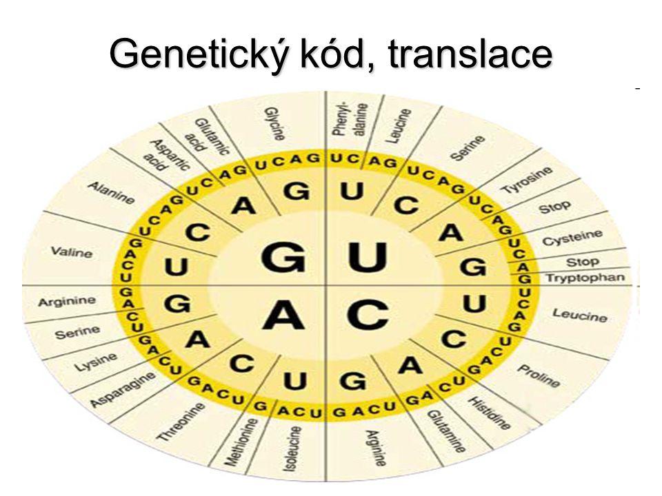 Genetický kód, translace